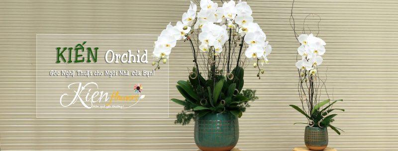 Kiến Flower